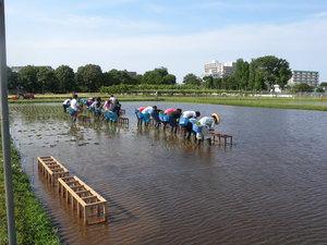 「食・農・森」~東大生態調和農学機構から.JPG